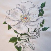 La rose anglaise
